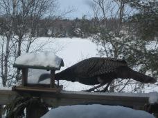 (CH)BigBird
